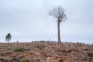 EAC Clearcuts